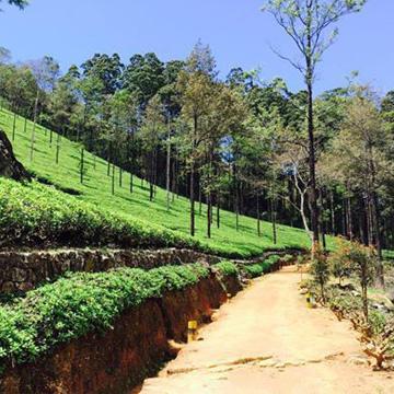 Sri Lanka Reiserouten