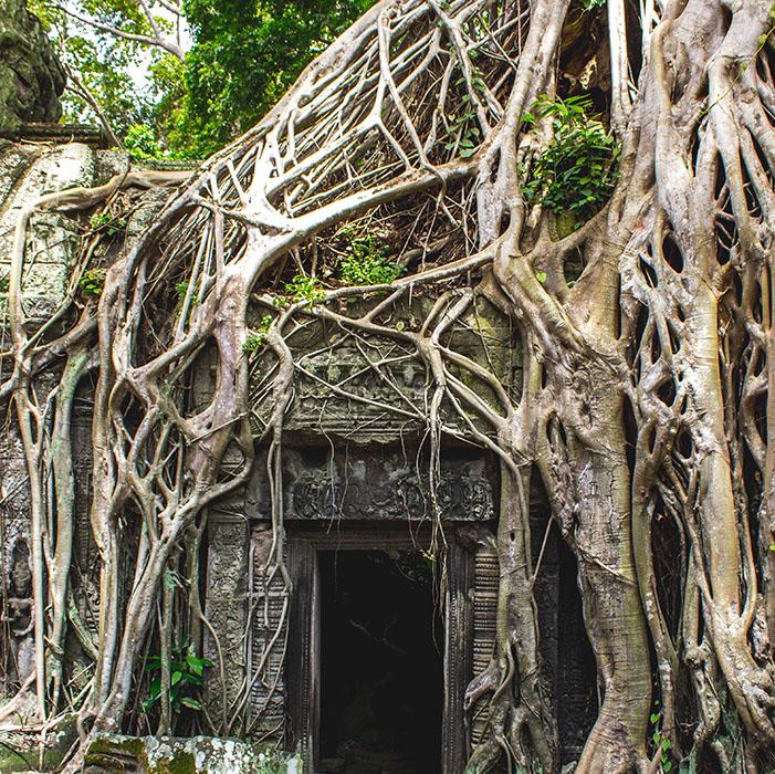 Ta Phrom, Tempel in Angkor, Kambodscha