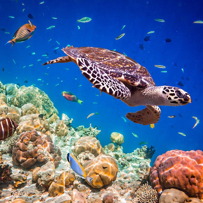 Tauchen, Malediven