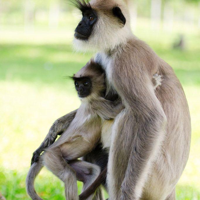 Affe, Polonnaruwa, Sri Lanka