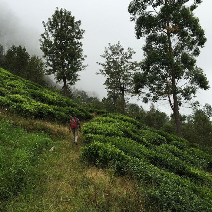 Sri Lanka, Bandarawela, Landschaft