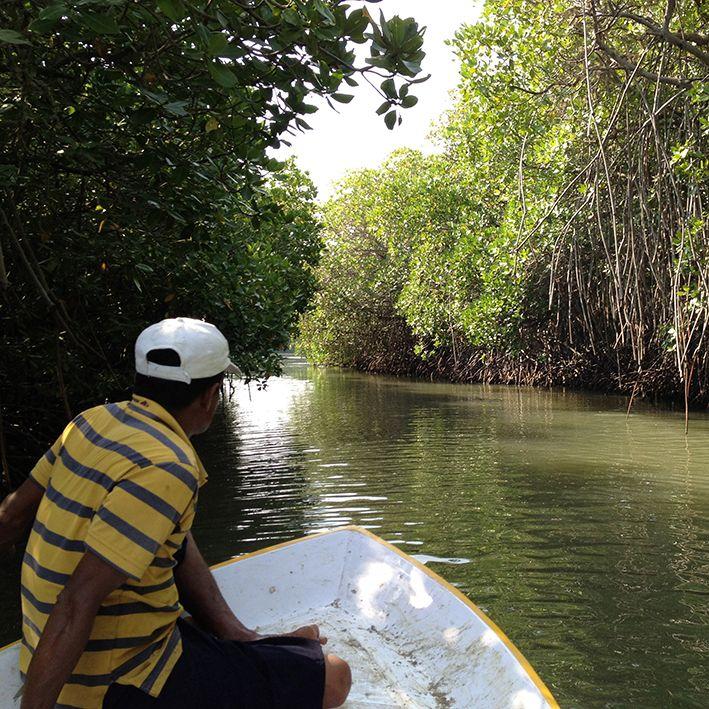 Bootsfahrt, Mangroven in Bentota, Sri Lanka