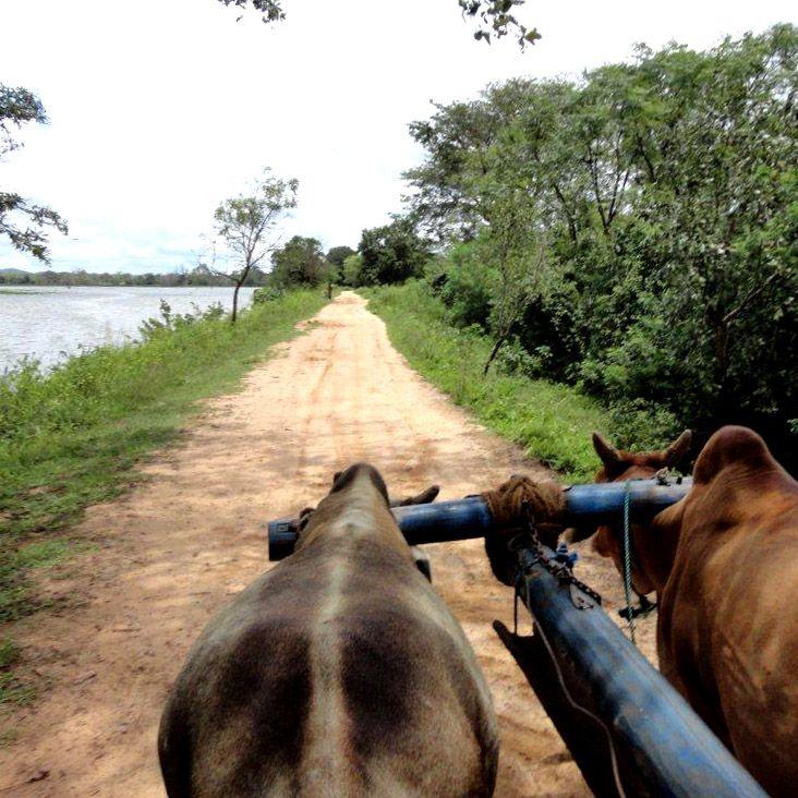 Bullock cart ride, Hiriwaduna, Sri Lanka