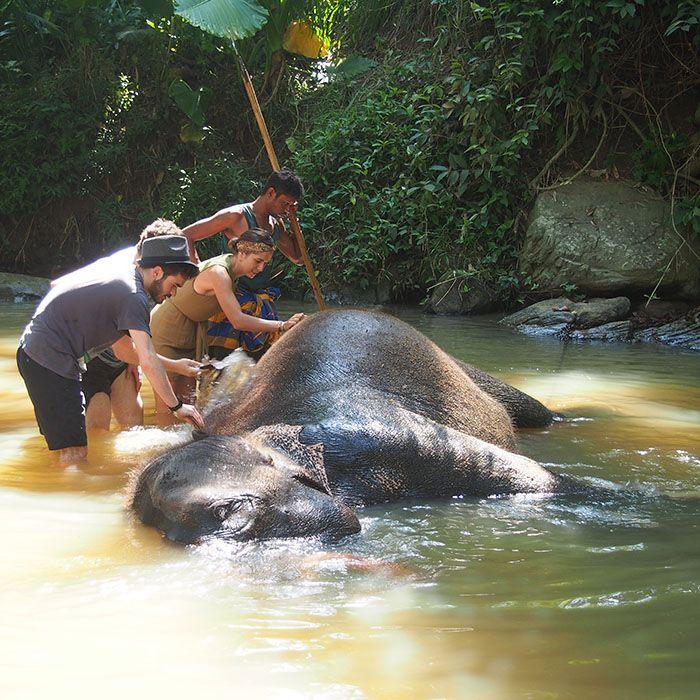 Sri Lanka, Elefanten, Baden