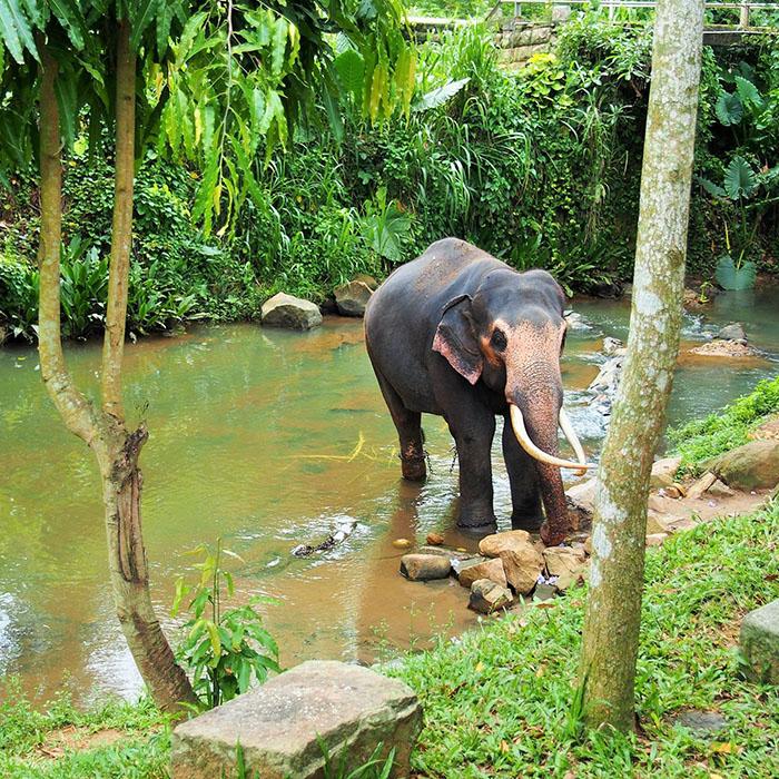 Elefantenwaisenhaus, Millenium Elephant Foundation, Sri Lanka