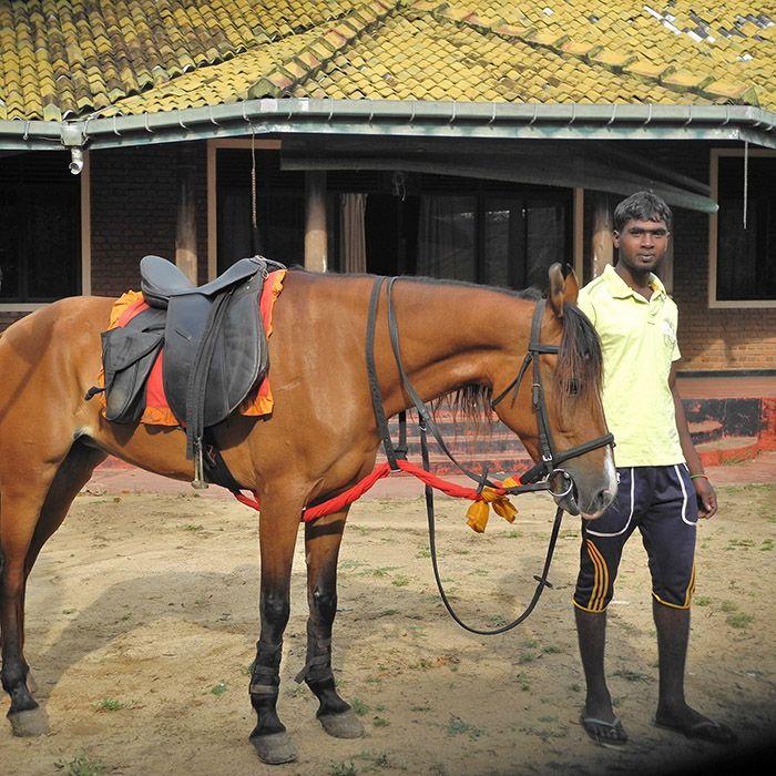 Horses, Tissamaharama, Sri Lanka