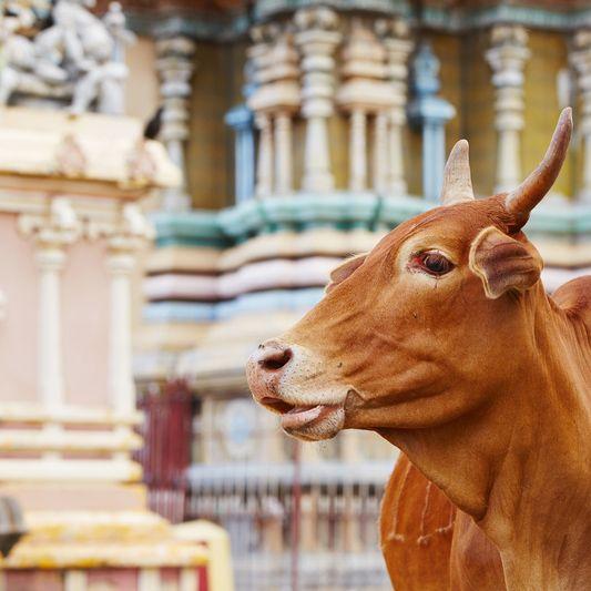 Jaffna, Tempel, Sri Lanka