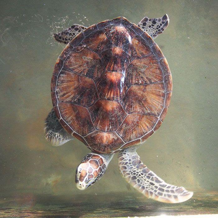 Sri Lanka, Kosgoda, Schildkröten, Projekt