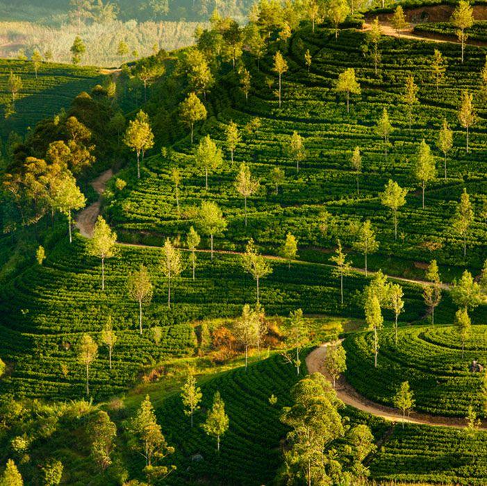 Sri Lanka, Waldwanderung, Wandern