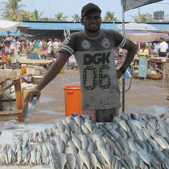 Negombo, Fish market, Sri Lanka