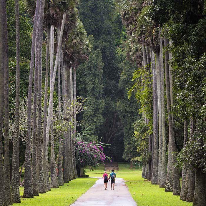 Botanischer Garden, Peradeniya, Kandy, Sri Lanka