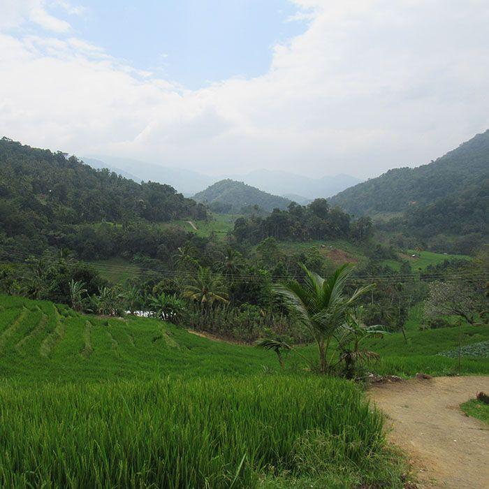 Sri Lanka, Radtour, Fahrrad, Teefabrik