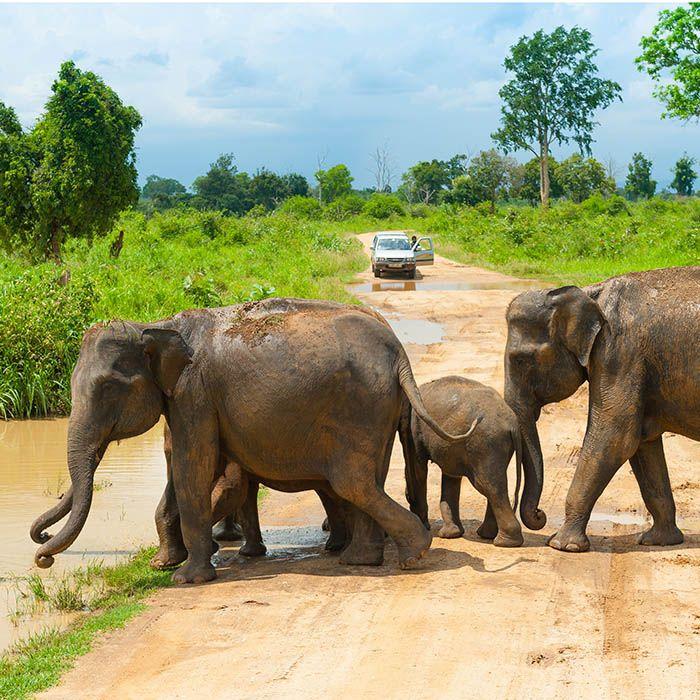 Safari, Udawalawe, Sri Lanka