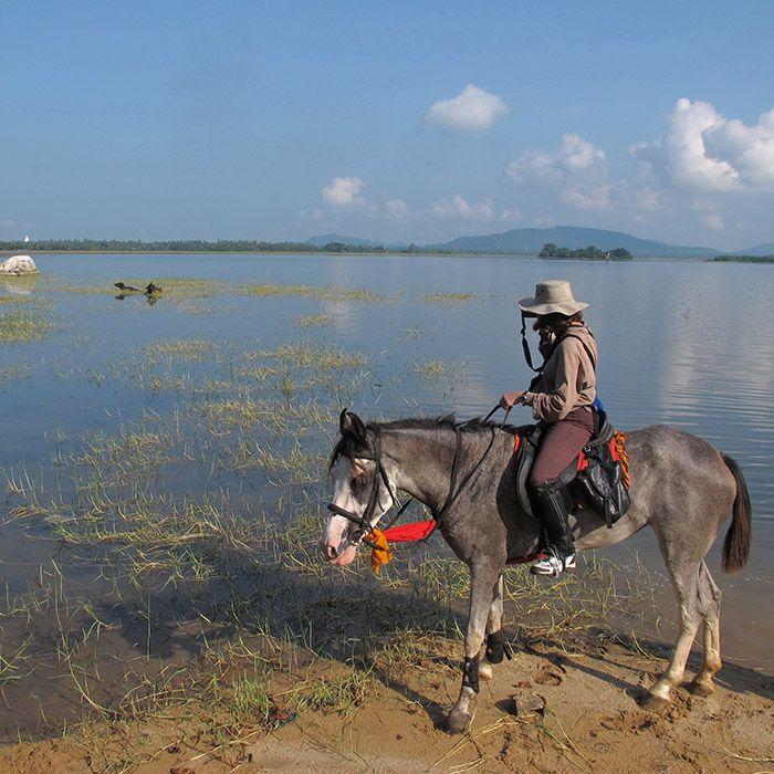Horse, lake, Sigiriya, Sri Lanka