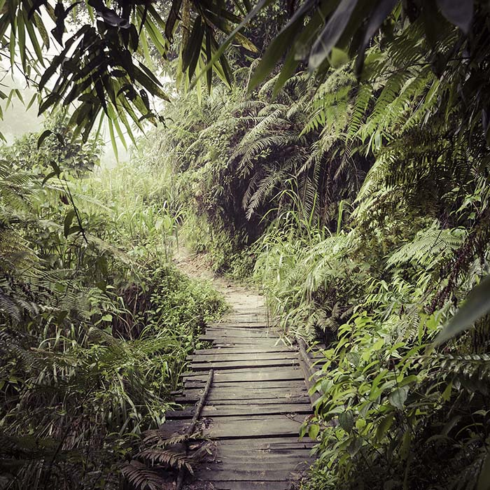 Wanderung, Sinharaja, Regenwald, Sri Lanka