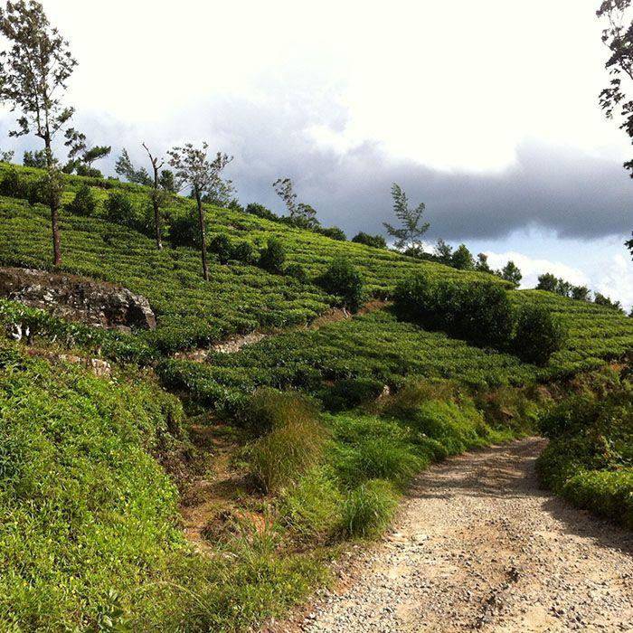 Sri Lanka, Teefabrik, Hochland