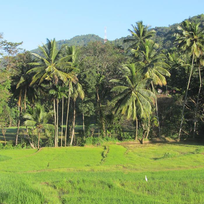 Knuckles Gebirge, Wanderung, Sri Lanka