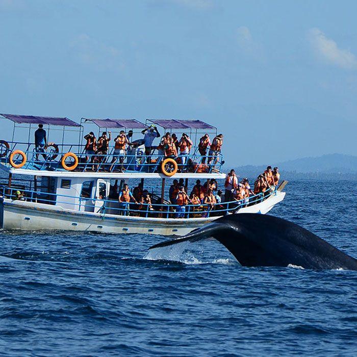 Sri Lanka, Wale, Delfine, Beobachten