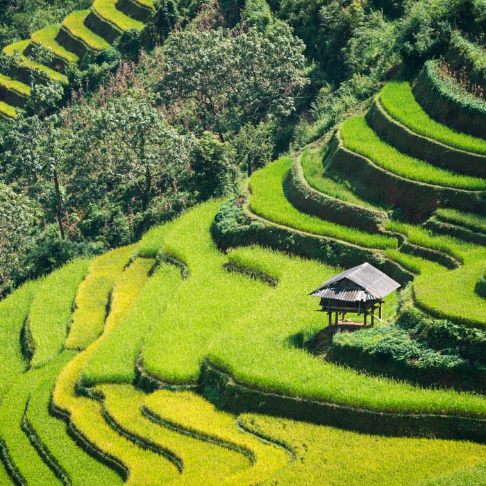Vietnam, Sapa, Reisfelder