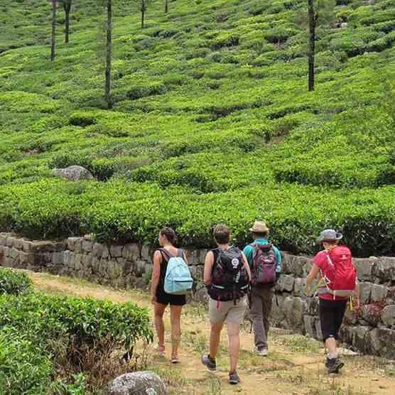 Sri Lanka Gruppenreisen