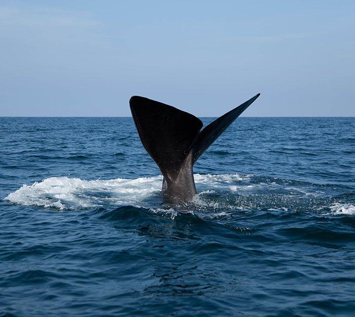 Sri Lanka, Walbeobachtung, Ausflug
