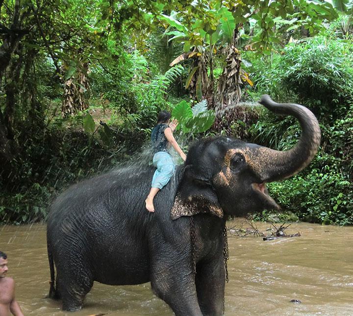 Ein Tag mit Elefanten