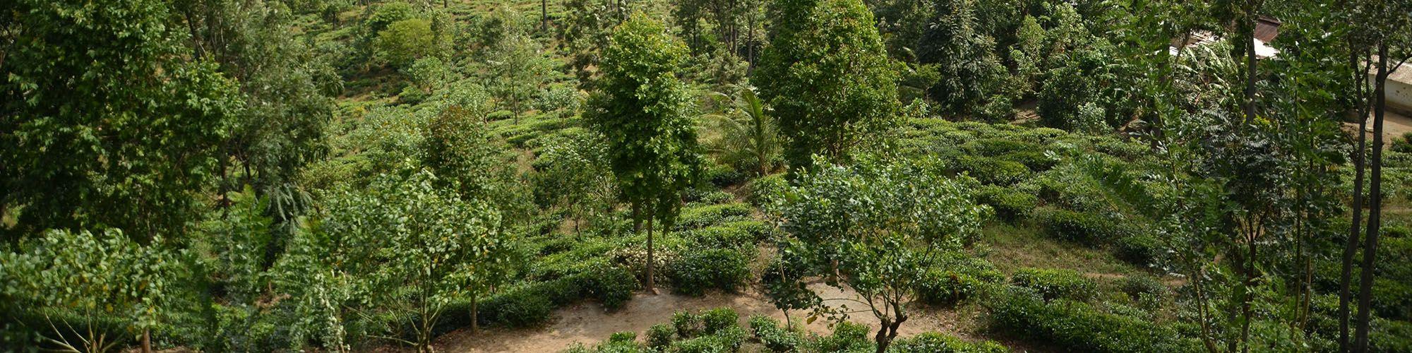 Sri Lanka, Bandarawela, Berg, Wanderung