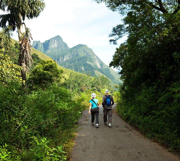 Sri Lanka, Bandarawela, Wald, Wanderung