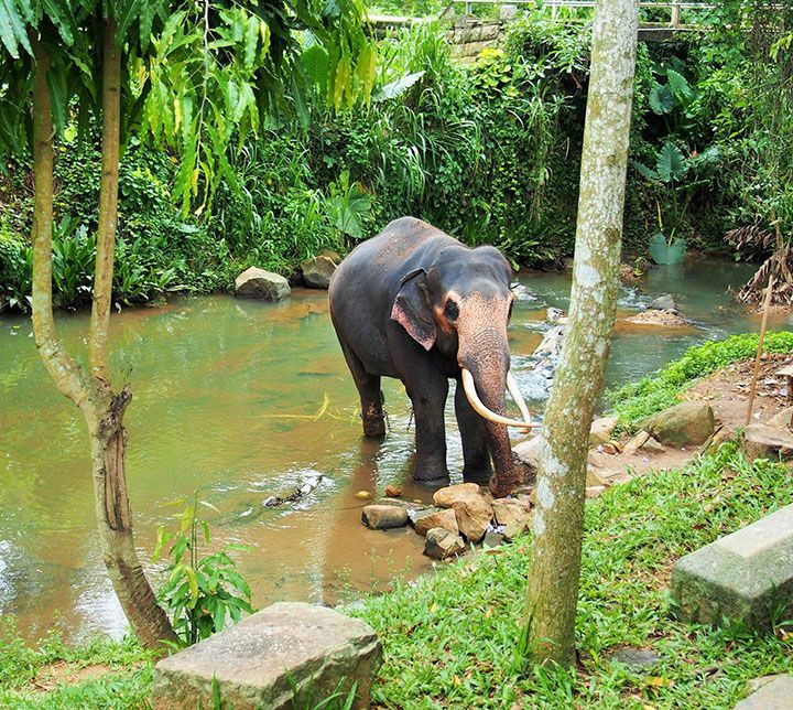Sri Lanka, Elefanten, Kegalle