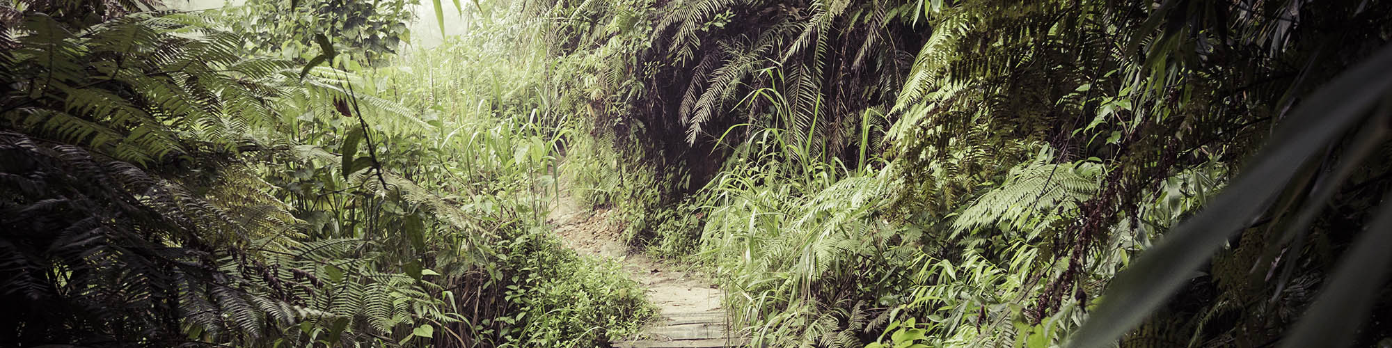 Regenwald, Sinharaja, Sri Lanka