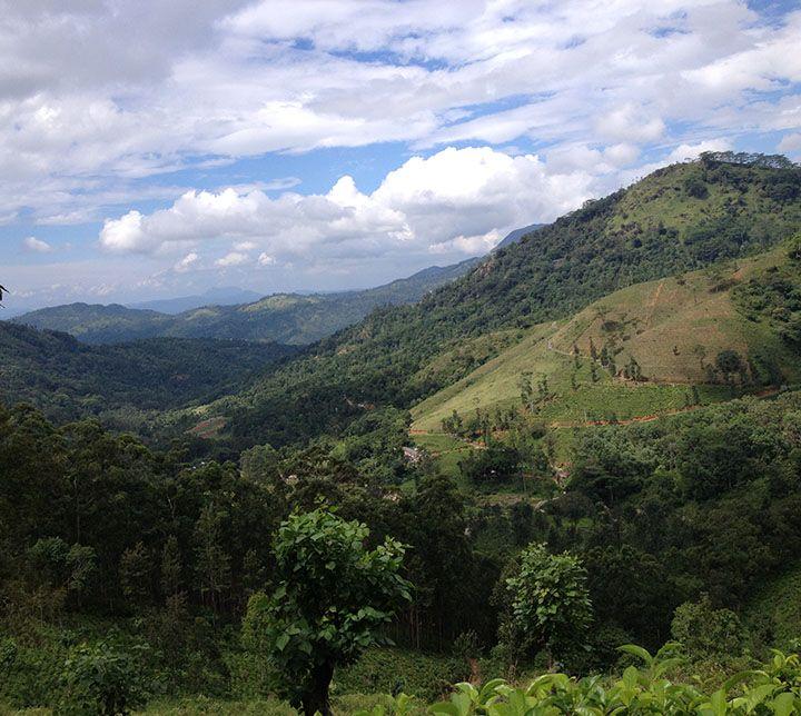 Sri Lanka, Knuckels Gebirge, Wanderung