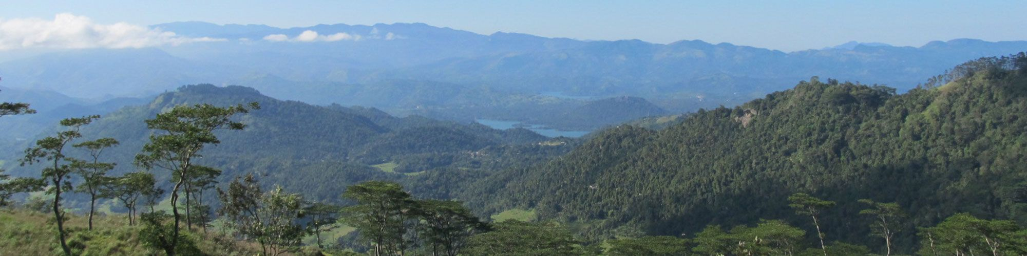 Sri Lanka, Wanderung, Teeplantagen