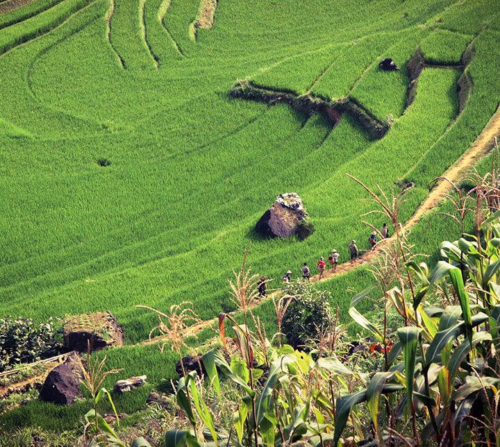 Wandern, Reisfelder, Vietnam