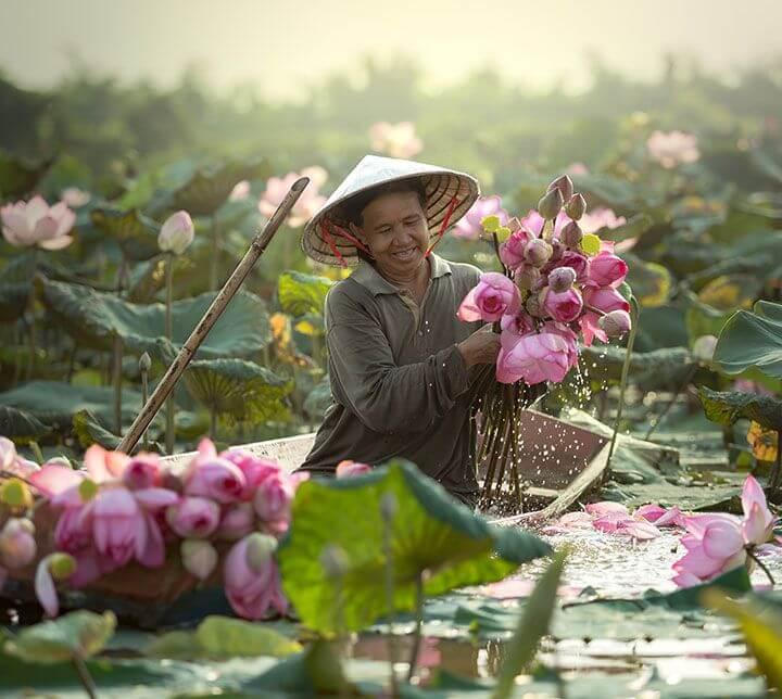 Lotus, Boot, Mensch, Vietnam